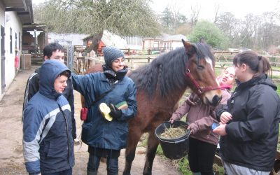 European Voluntary Service: my experience in Beaulieu