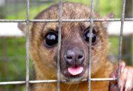 SVE-in-Olanda-12-mesi-di-volontariato-nella-protezione-degli-animali-web