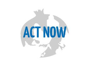 Act now to break up violence – Creative international workshop of theatre and video