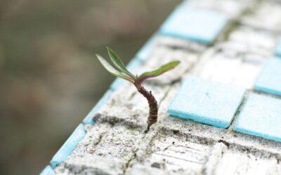 Come affrontare le avversità trasformandole in opportunità di crescita?
