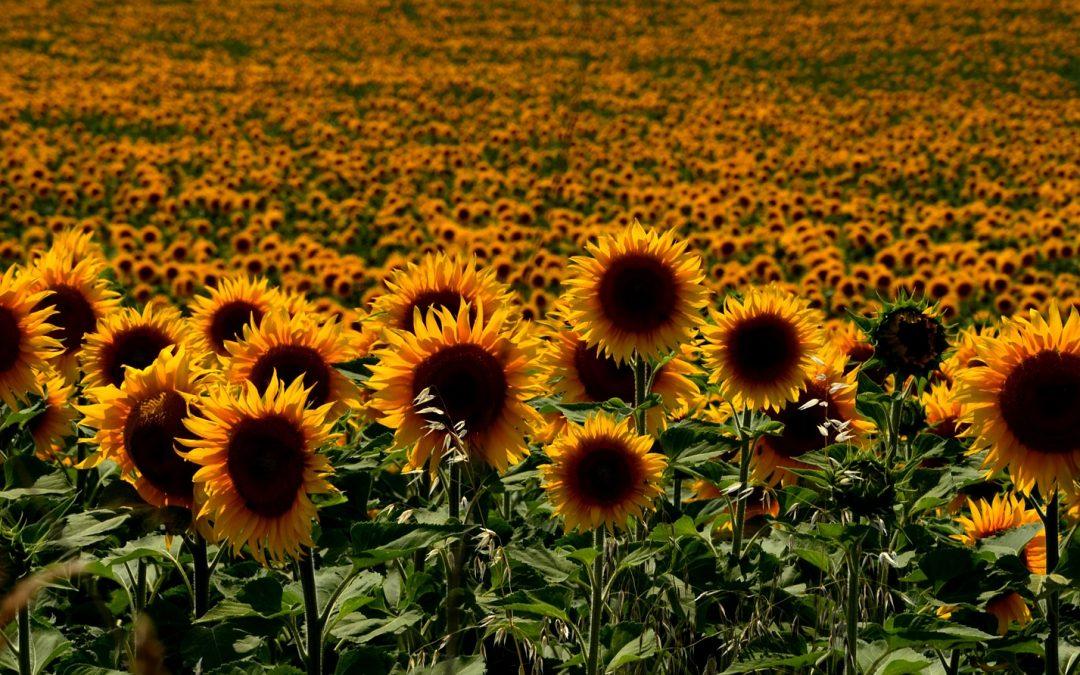 Riabilitazione sociale, biogiardinaggio e fattoria sociale in Ungheria