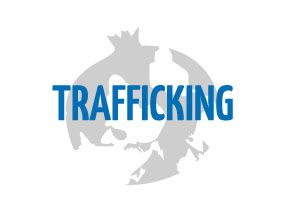 Peer education approach for trafficking prevention